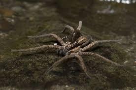 הדברה עכבישים